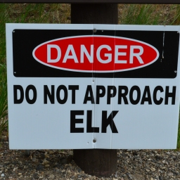 Elk Encounter!