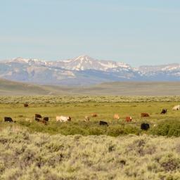 Wyoming Bound