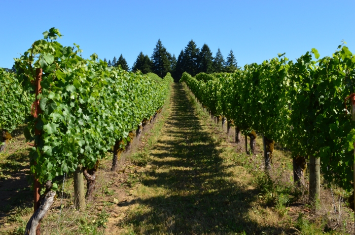 Tualatin Estate Vineyards