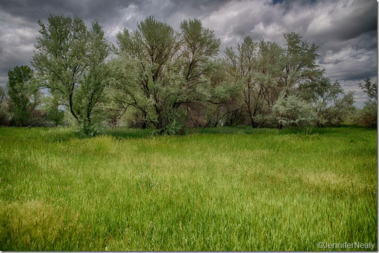 _D611008_HDR-2