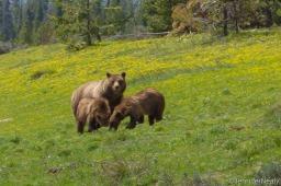 Grand Teton National Park Part III – Wildlife