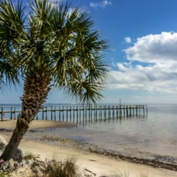 Florida's Forgotten Coast…and Friends!